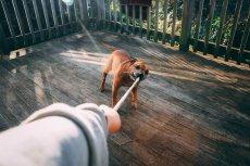 To nie jest najlepszy sposób na zabawę z psem